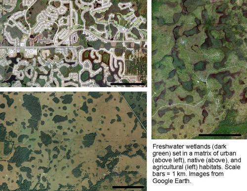 Wetland landscape mosaic
