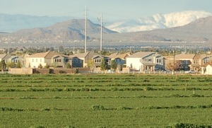 This farm will affect the yards soon to replace it long after it is gone (Photo: Central Arizona-Phoenix LTER).